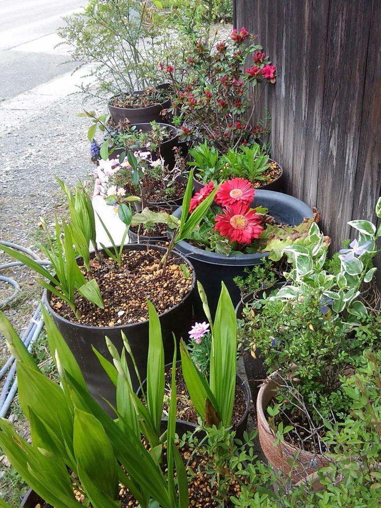 三池焼の鉢植えの花です。