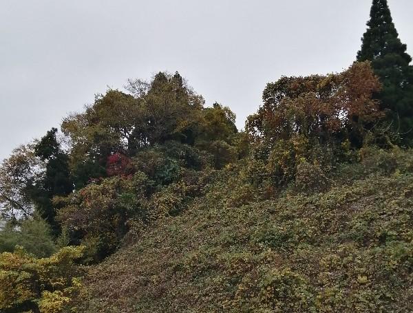 三池焼付近の紅葉です。